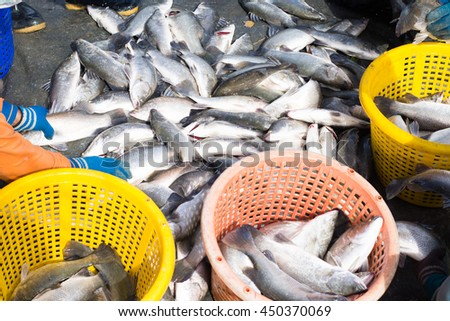 Local fishermen are collecting the fishes in the baskets. - stock photo