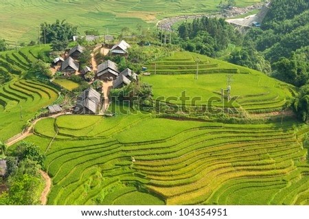 Local Village with Rice Terraces