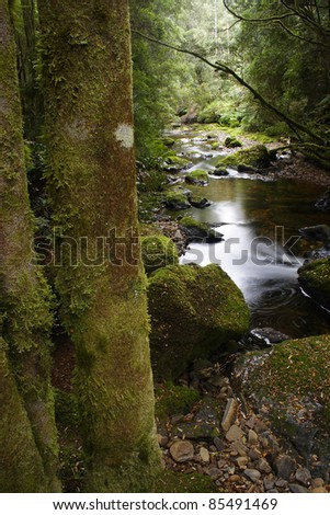 Local woodland in Tasmania off the coast of Australia - stock photo
