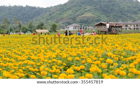 LOEI THAILAND - DECEMBER 27 : Tourists taking photos at marigold field in Loei province, Thailand on december 27, 2015