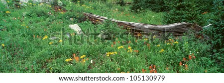 Log Amid Alpine Flowers, Ouray, Colorado - stock photo