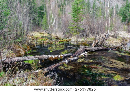 Log causeway across a forest creek in Altai - stock photo