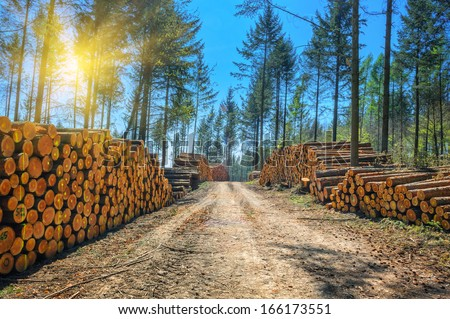 Log stacks along the forest road - stock photo