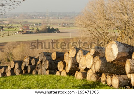 log timber tree trunks in the flanders forest autumn - stock photo