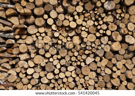 Logged wood in forest - great for topics like forestry, wood as fuel etc.