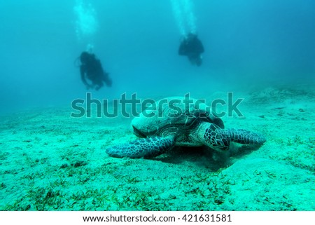 Loggerhead Turtle - Caretta caretta - Red Sea - stock photo