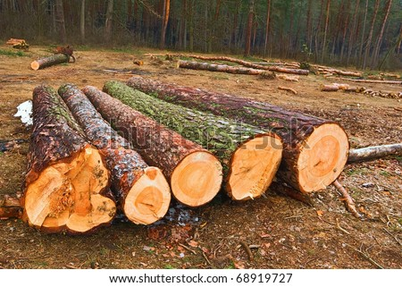 logging - stock photo
