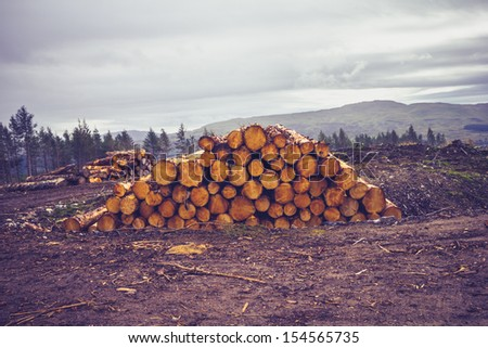 Logs against a gloomy sky - stock photo