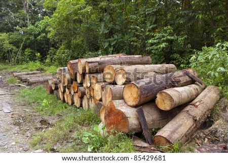 Logs cut from the rainforest in the Ecuadorian Amazon
