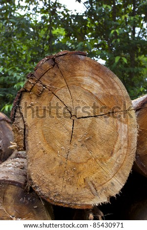 Logs cut from the rainforest in the Ecuadorian Amazon - stock photo