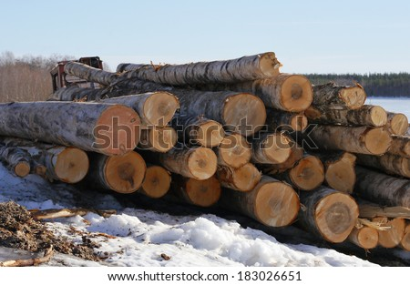 logs for firewood - stock photo