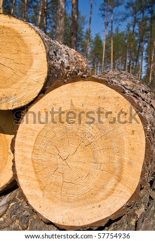 logs in a forest - stock photo