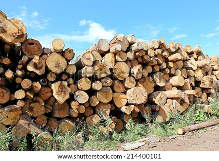 Logs in the logging - stock photo