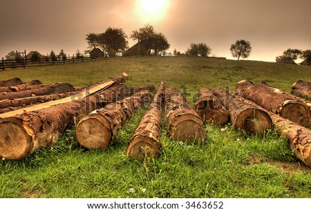 Logs lying on the ground - stock photo