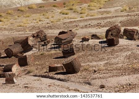 Logs of Petrified Tress created 200 million years ago in the Petrified National Park, Arizona, USA - stock photo