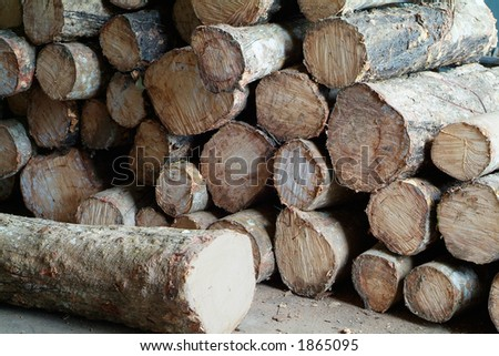 Logs of rubber tree
