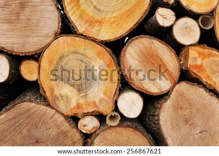 Logs of wood, cross cut - stock photo