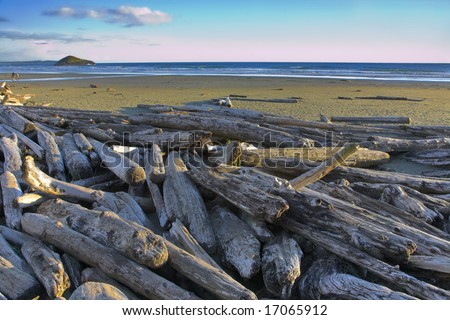 Logs on the well-known Pacific beach of island Vancouver - stock photo