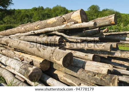 Logs pilled for processing - stock photo
