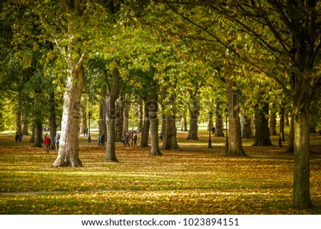London Greenpark in Autumn with golden leaves.