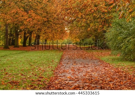 London Kensington Gardens Park alley with line of autumnal trees and fallen autumn leaves. Autumn in London park with path covered by fallen autumnal leaves. - stock photo
