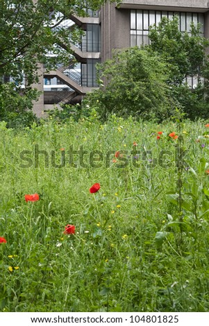 LONDON, UK-JUNE 9: A wild flower meadow surrounded by high rise buildings part of the Barbican Estate, Fann Street Garden open for the Open Garden Squares Weekend, June 9, 2012 in London UK - stock photo