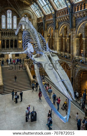 London, United Kingdom. Circa August 2017. Blue whale skeleton in the main hall of the Natural History Museum of London.