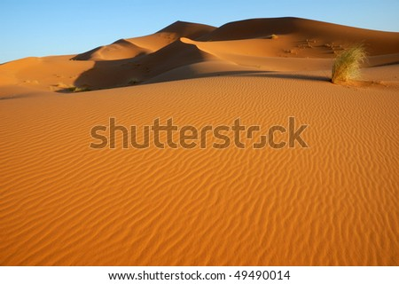 Lone bush in the dunes - stock photo