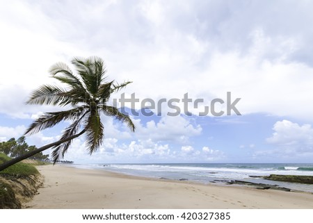 lone coconut tree on paradise beach in Bahia Brazil - stock photo