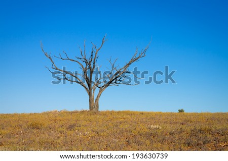 Lone dead tree in the Sturt Desert, outback New South Wales, Australia - stock photo