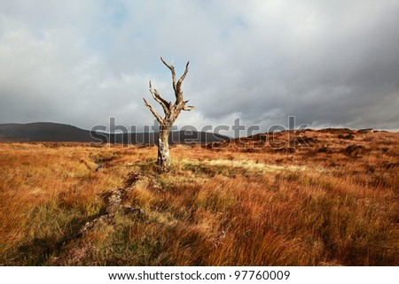 Lone dead tree on Rannoch moor in the Scottish highlands - stock photo