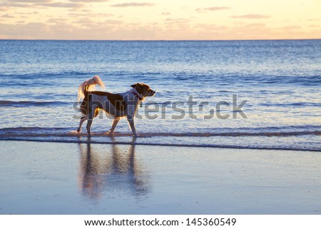 Lone Dog on Beach