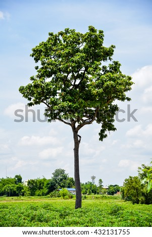 Lone green trees, blue sky background. - stock photo