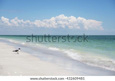 Lone Gull on the Sanibel Island Beach - stock photo