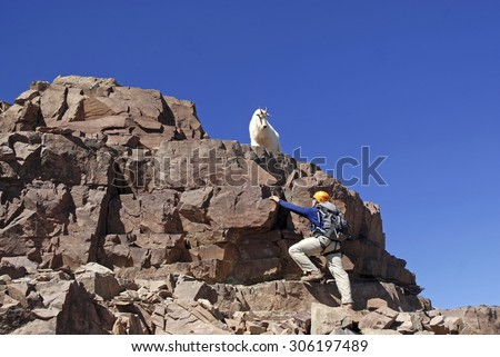 Lone mountain climber and Mountain Goat on Pyramid Peak, Colorado - stock photo