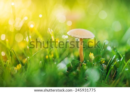 lone mushroom in sunlight - stock photo
