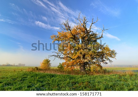 lone oak tree in the field against clear blue sky - stock photo