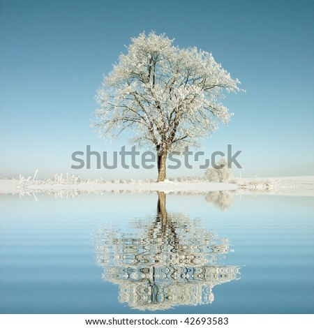 Lone oak tree in the winter scenery with the frost on the branches in the light of the morning sun. - stock photo