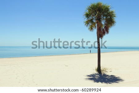 Lone Palm Tree against a clear blue sky in Miami's Crandon Park Beach in Miami - stock photo