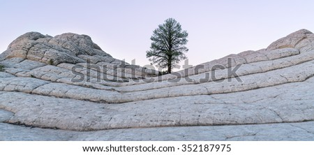 Lone pine at White Pocket area of Vermilion Cliffs National Monument - stock photo