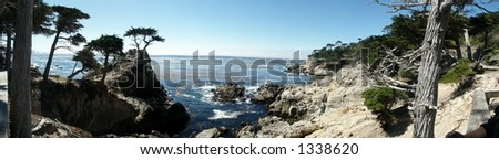 Lone Pine Panorama, near Monterey, California