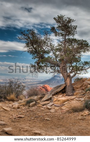 Lone pine tree in Red Rock Canyon Nevada overlooking valley