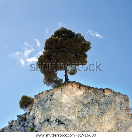 Lone pine tree on the edge of a hilltop cliff.
