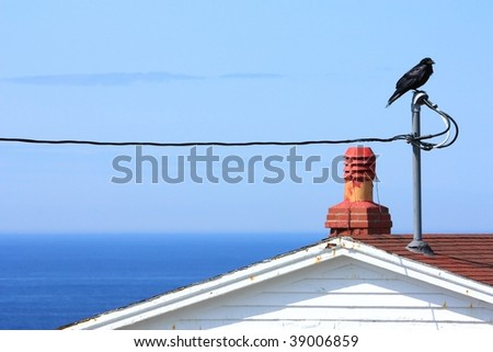 Lone raven and ocean - stock photo