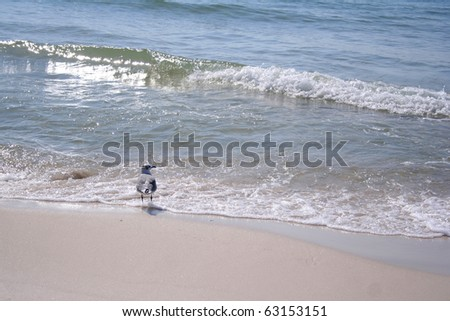 Lone Seagull on the  Beach at Gulf Shores, Alabama, USA, at end of summer.