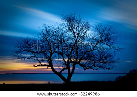 lone silhouette tree with blue sky as background in the Outer Banks of North Carolina - stock photo
