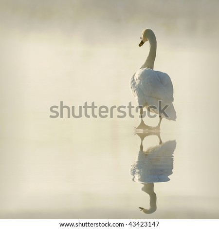 Lone swan on the ice surrounded by fog goes into the light of the rising sun. - stock photo