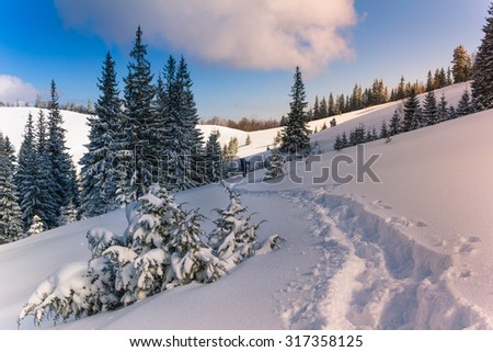 Lone traveler with a backpack walking along the trail in the winter mountains. View of snow-covered conifer trees and deep snow at sunshine. - stock photo