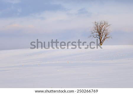 Lone Tree and Snow Covered Field - stock photo
