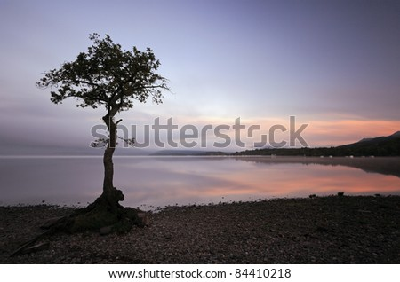 Lone tree at Sunrise on the shores of Loch Lomond